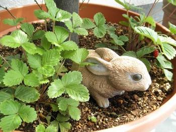 ウサギといちご.jpg